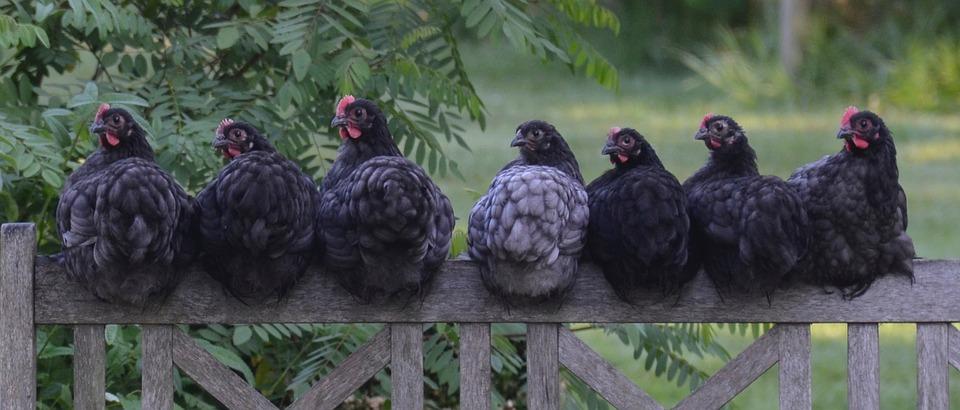 Aliment oiseaux Villeneuve sur Lot