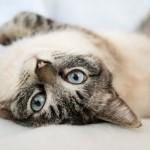 Animalerie chat Lot et Garonne (47)