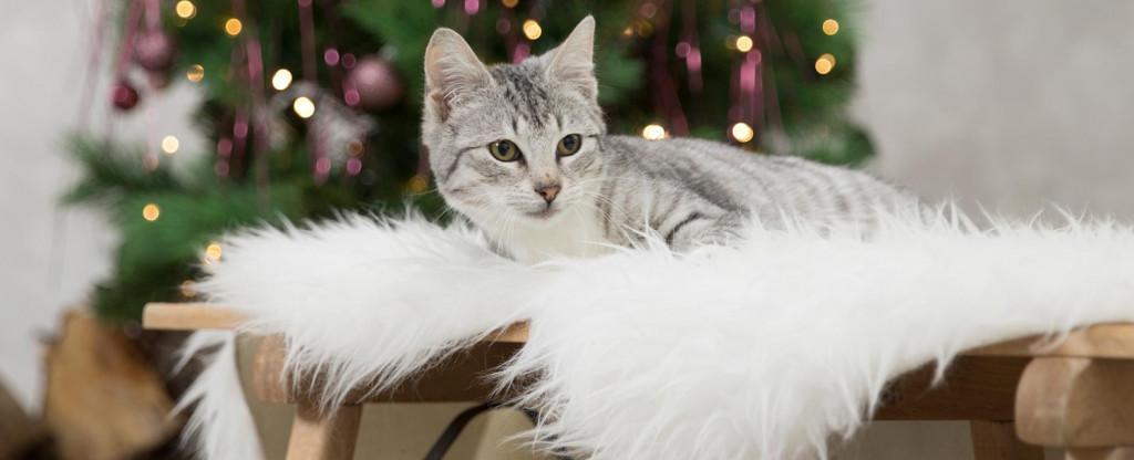 Chaton gris Noël