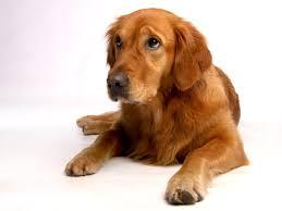 Accessoire chien Pujols (47)