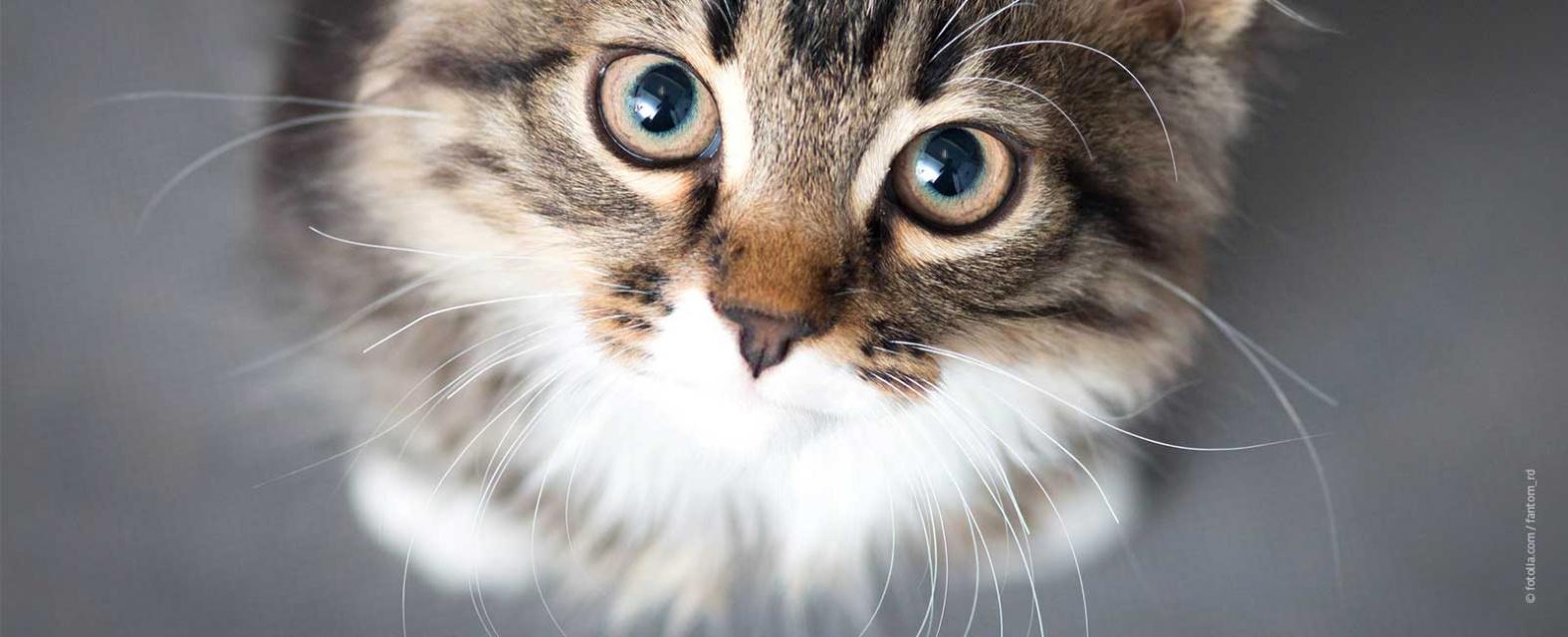 croquettes chat économique Villeneuve sur Lot