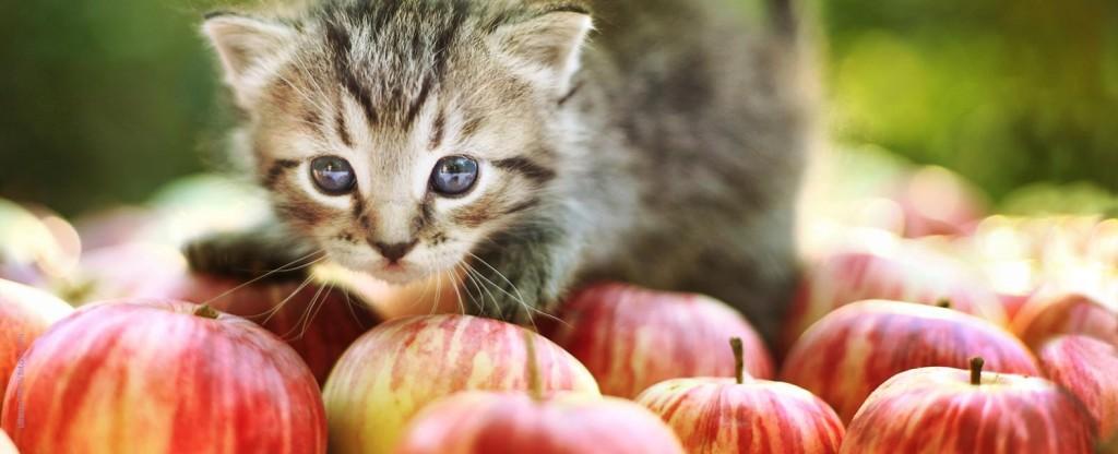 Tête chaton