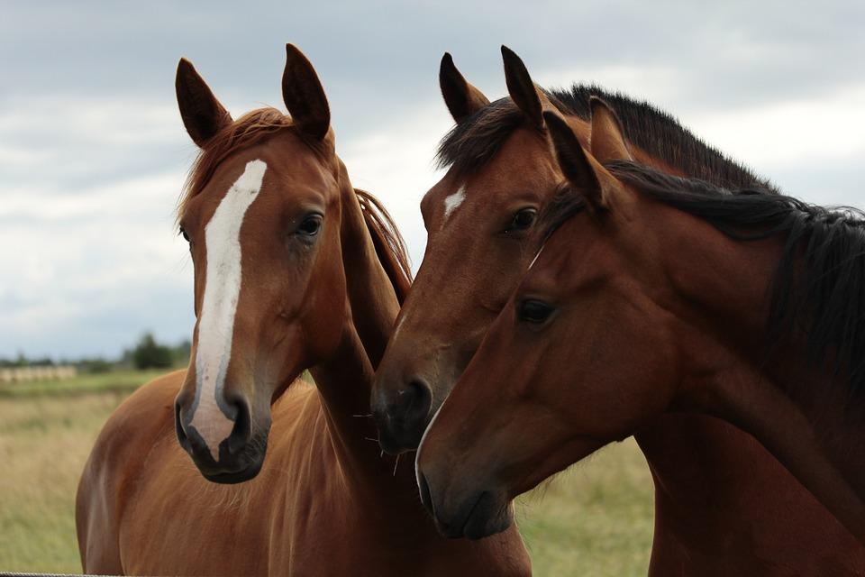 couverture chevaux