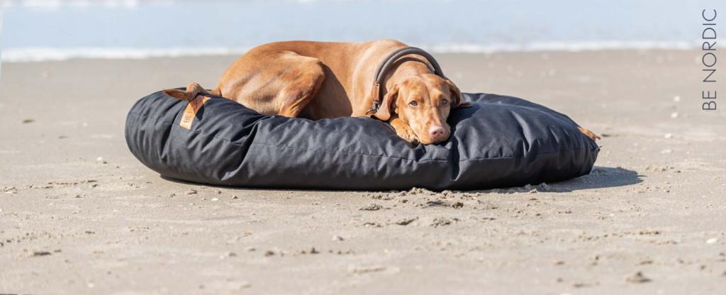 Coussin chien plage