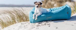 Panier petit chien plage