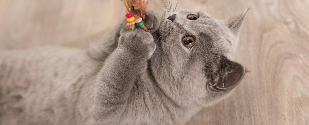 jouet chat villeneuve
