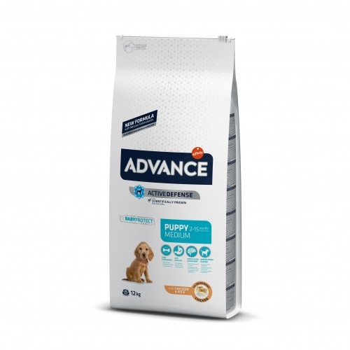Advance medium chiot